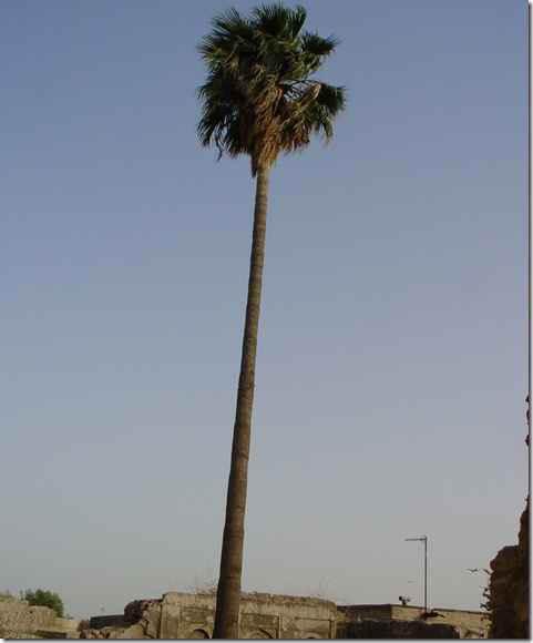 Photo of تهیدستی آزادگان